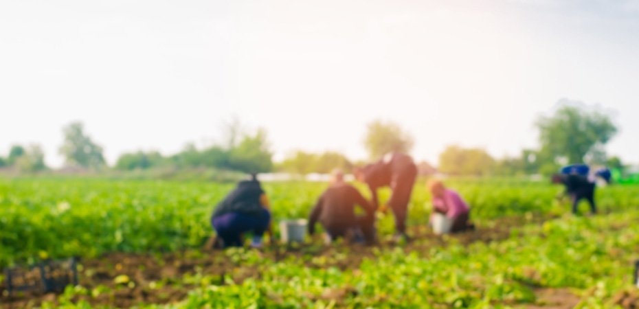 workers in agriculture blurred